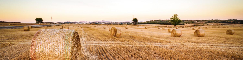 imagen campo trigo
